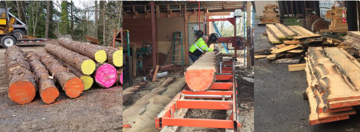 Images of Valley pine logs and lumber being prepared for testing
